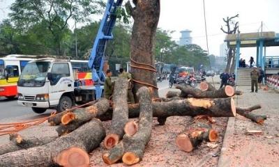 chặt cây