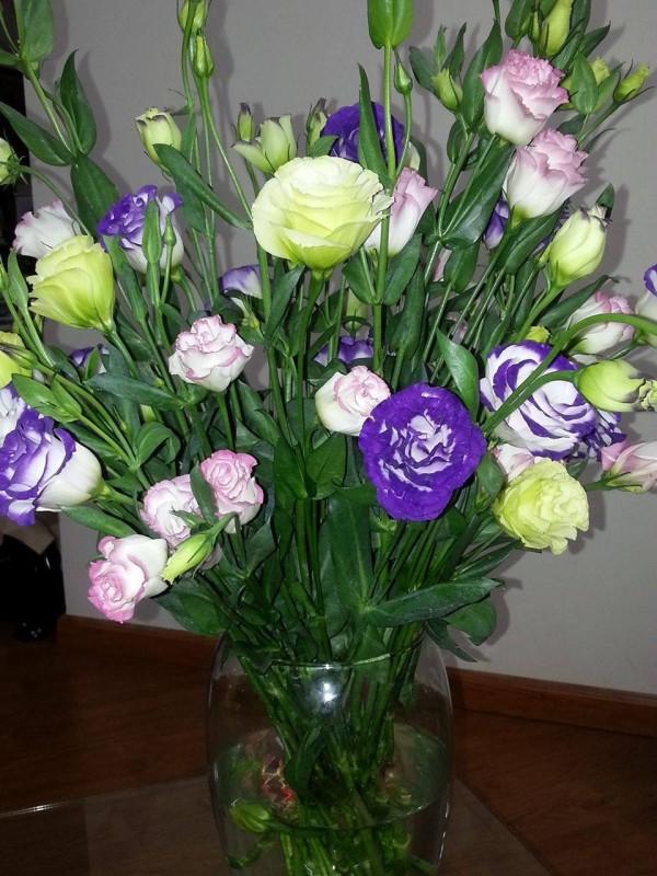 Hoa cat tuong Da Lat