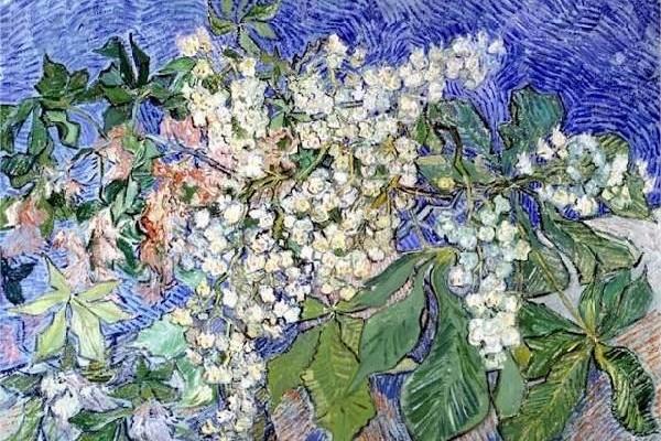 BV Phúc -Van Gogh - Blossoming Chestnut Branches